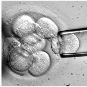celulas-madre2