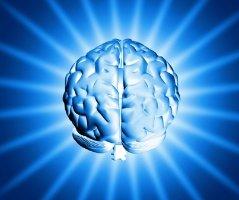 brain2_280