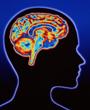 cabeza-cerebro