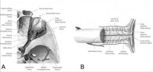 anatomy-eye