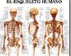 atlas de reumatologia