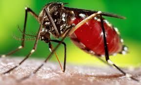 images dengue [1]