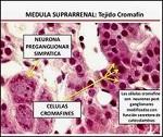 Célula cromafín